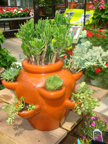 Succulent container garden a succulent garden created in a flickr - How to make a succulent container garden ...
