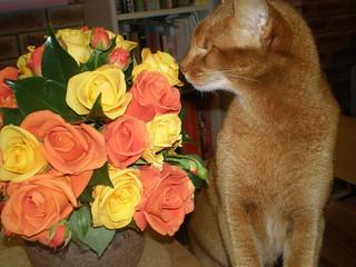 Sahara sniffs flowers