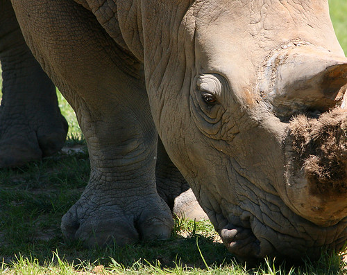 Zoomed in Rhino | by steveables