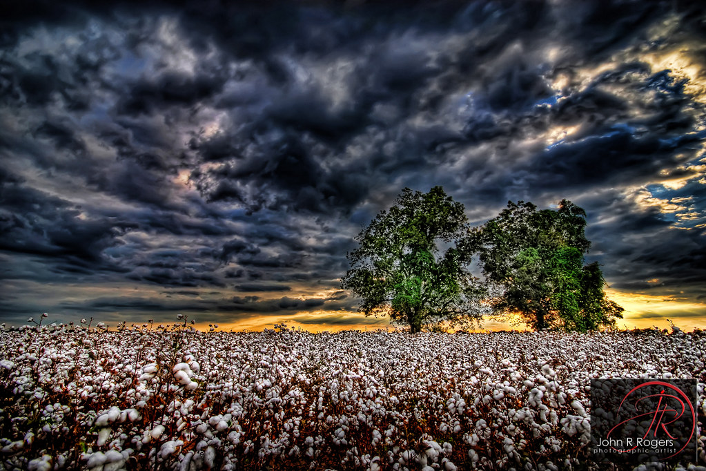 Cotton Fields Back Home Lyrics And Chords