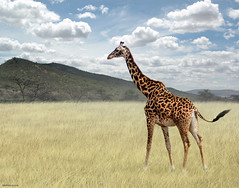 Once Upon a Time in Kenya - 3 - | by Ben Heine
