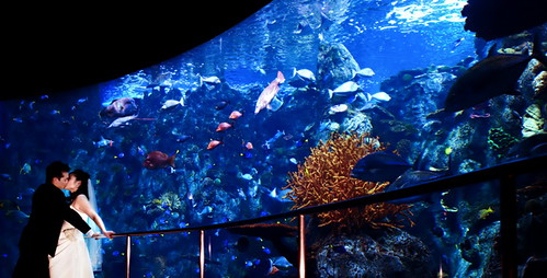 aquarium of the pacific wedding photo by jay studio com