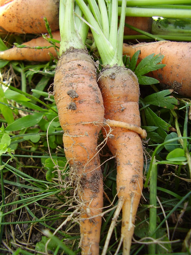 Image result for carrot love