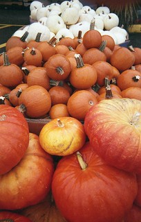 Day 275/365 - Pumpkins | by Great Beyond