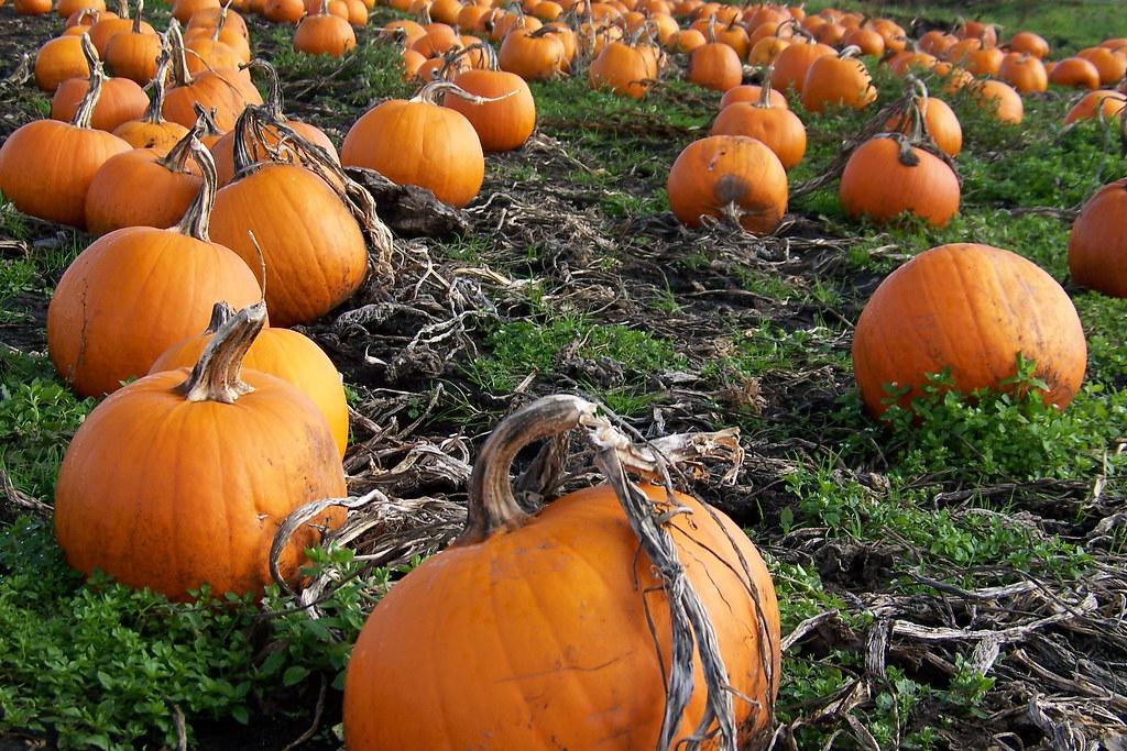 The Pumpkin Patch Staten Island Chelsea Rd