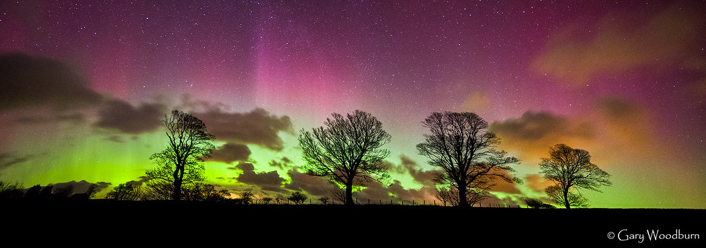 The Magic Trees - Aurora Borealis, Doxford, Northumberland