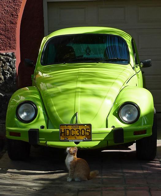 Cat & beetle   Volkswagen Beetle (rare in Cuba) with cat who…   Flickr