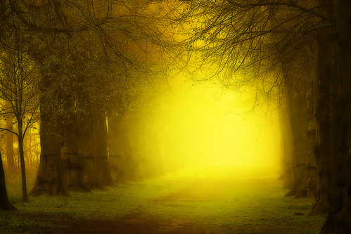 (Can't see the) Trees for the mist. | by Martyn Starkey