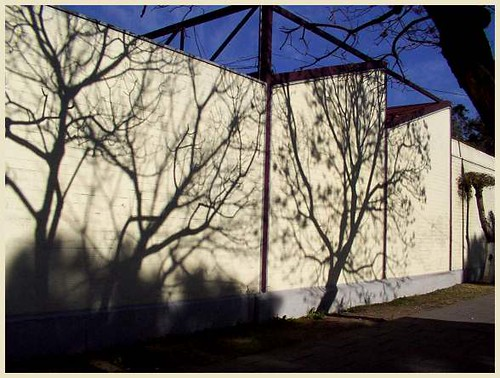 Jacaranda Shadows | by Catling_Mex
