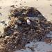 Bahamas: Trash
