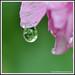 MacroMania - Reflection in a rain drop....