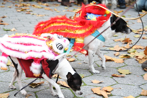 Chinese Dragon Dogs Mcgolrick Park Dog Halloween Costume