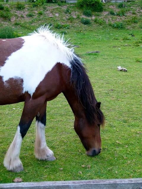 fluffy horses - photo #21