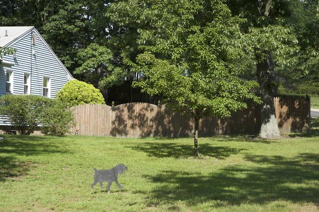 Helmetta Dog And Cat Licnese
