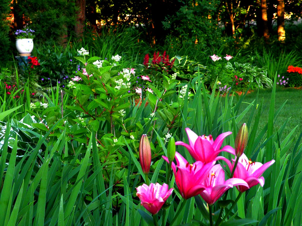 David 39 S Garden Asiatic Lilies Always Amaze Me David