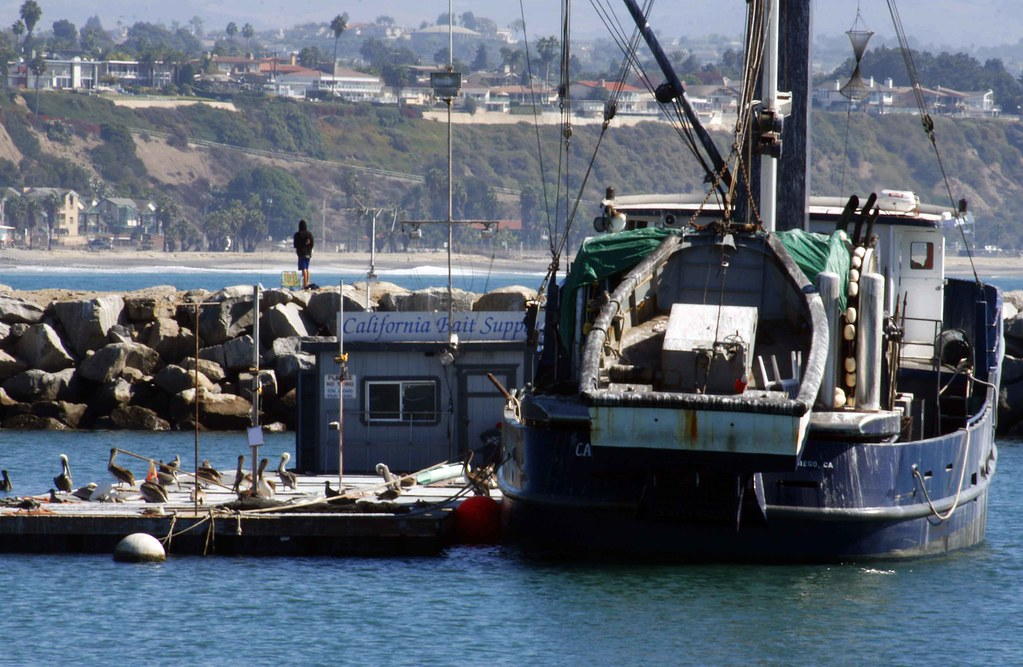 Dana point marina bait station an old fishing ship for Fishing dana point