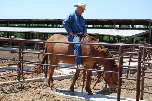 John Kidd On Mule Kidd Farm Modesto By Amy Moffat 13