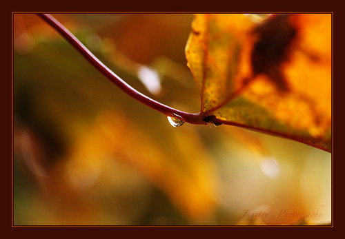 Autumn's Tear | by Janette's photography