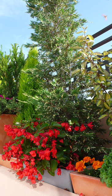 Jardineras con flores y arbustos flores y plantas en - Jardineras con plantas ...