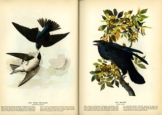 Plates from Audubon's Birds of America | by nurse_marbles