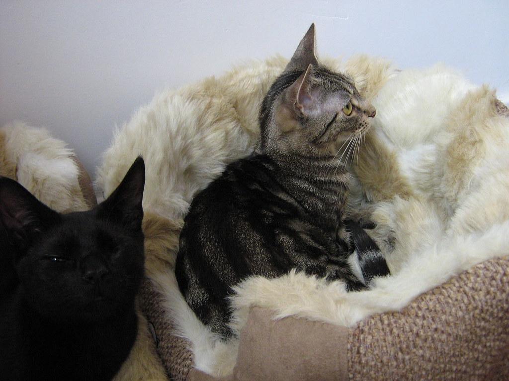 Cats Protection League Shop Weston