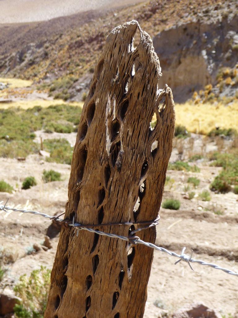 Madera de cactus seco Toms Ortega Flickr