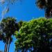Myakka River State Park Trees Palms Spanish Moss Oak