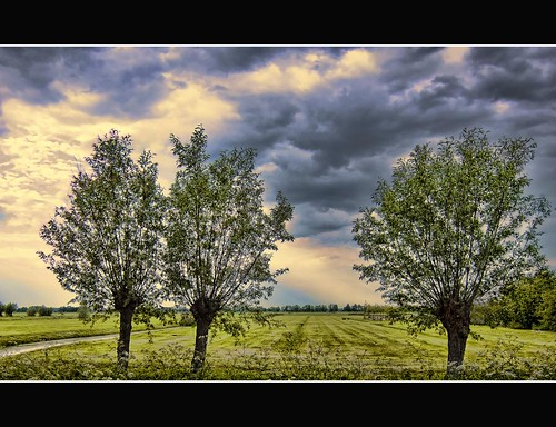 three trees | by Wim Koopman