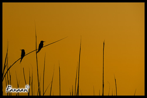 Two birds at the sun-set | by Al3liphoto