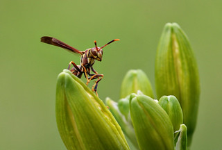 Oh, hai, Wasp! | by Weather Moose