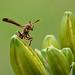 Oh, hai, Wasp!