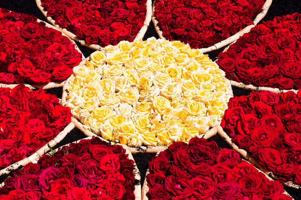Rosas rojas significado images - Significado rosas amarillas ...