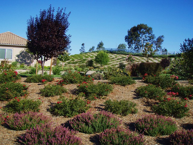 Hillside planting with drought tolerant plants flickr for Hillside landscaping plants