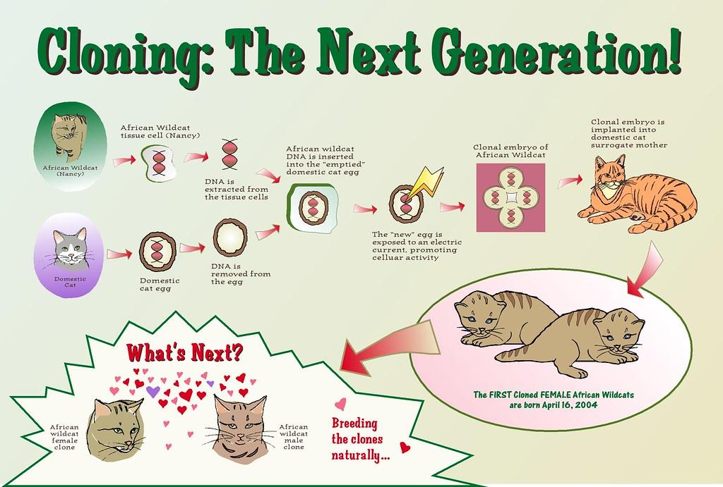 cat cloning chart audubon nature institute audubonimages flickr cat cloning chart by audubonimages cat cloning chart by audubonimages