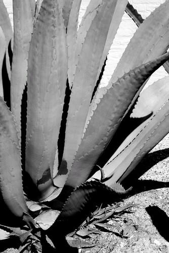 En blanco y negro - 1 part 1