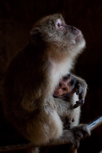 Macaque - Monkey Cave Temple - Thailand | by Pavel Sigarteu
