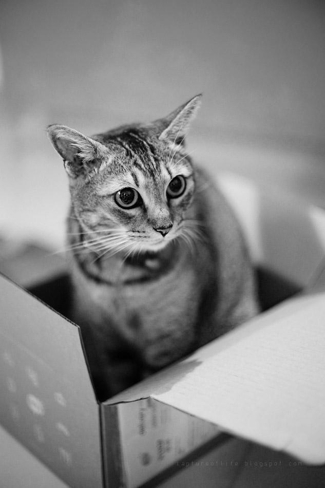 Bill in the box