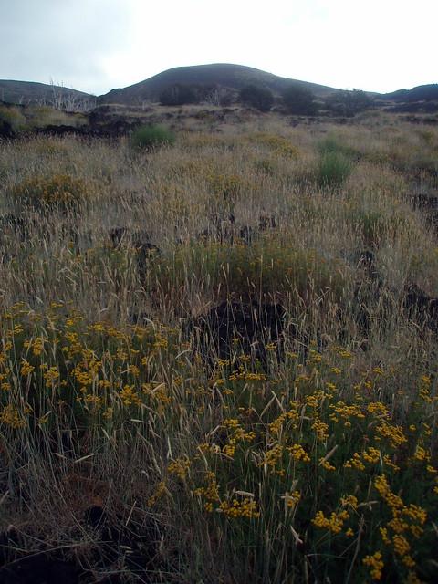 fertile land - photo #36