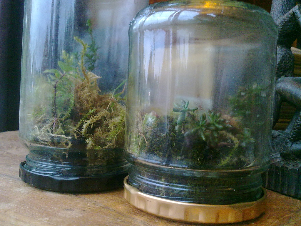 Image result for terrariums