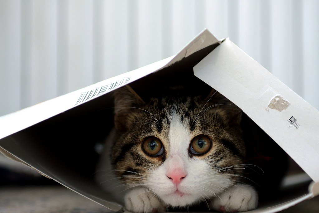 Cat Trying To Fit In Small Box