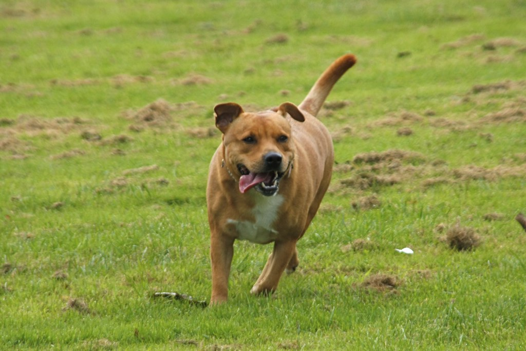 Dogstrust Org Uk Rehoming Dogs Filters Lou Small N