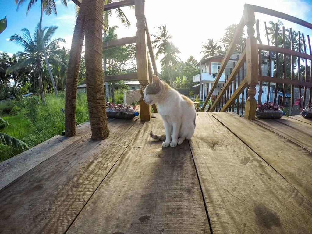 A cat in Sri Lanka