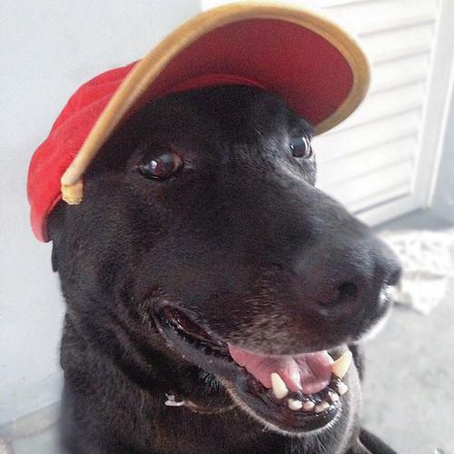 abandoned-dog-gas-station-employee-negao-brazil-1