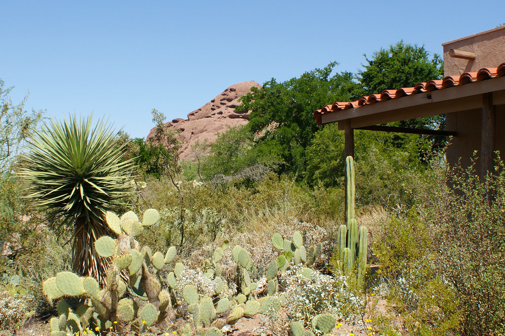 Papago Buttes At Desert Botanical Garden Located In