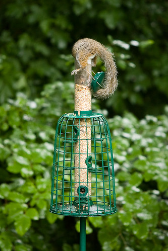 Squirrel proof bird feeder - Day 305 of Project 365 | Flickr