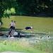 Swimming at a roadside lake
