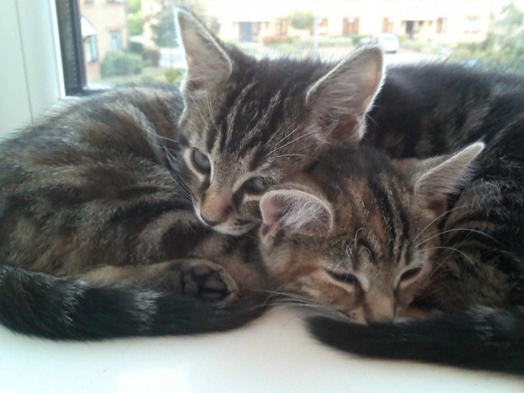 Cats Cuddling Video