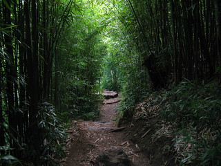 Bamboo Forest along the Pipiwai Trail, Haleakala National Park, Maui, Hawaii | by Mastery of Maps