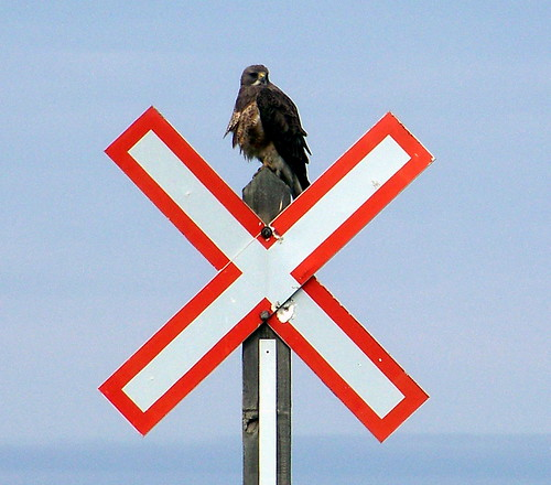 SKSW11e11 Red-Tailed Hawk on Railway Crossing Sign, SK 2011 | by CanadaGood