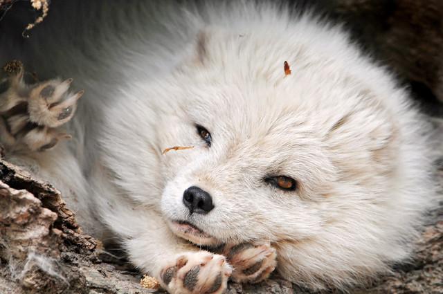 White fluffy cutie